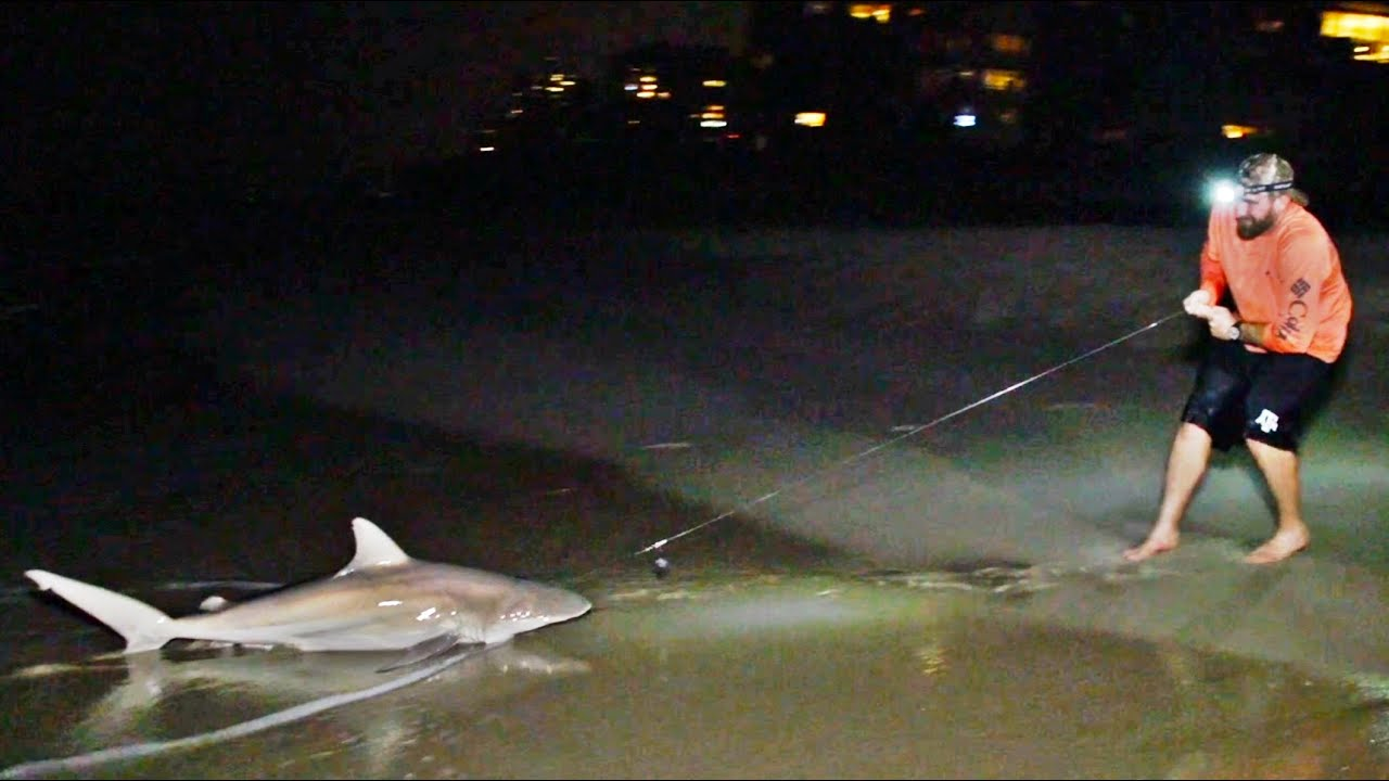 Fishing group wants people to eat more dogfish, skates