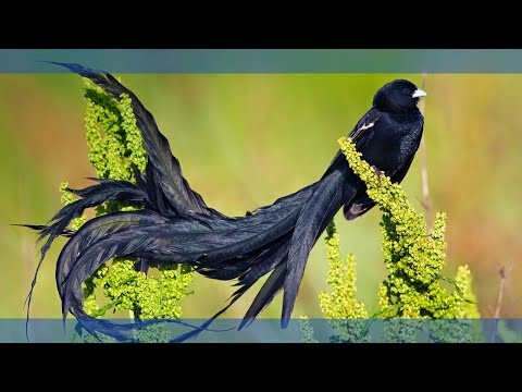 Top Five Most Beautiful Birds - Part 01