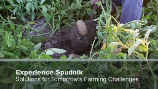 Experience Spudnik