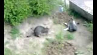 Кошачий СЕКС.._1.3GP