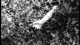 El Cebo (Es Geschah am Hellichten Tag) (Ladislao Vajda, España, Alemania, 1958) - Trailer