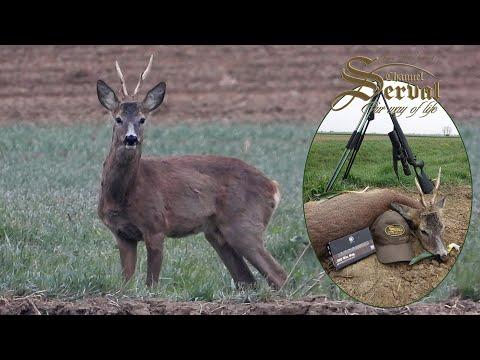 Spring Roebuck Hunting in Croatia – Sv. Martin 2021