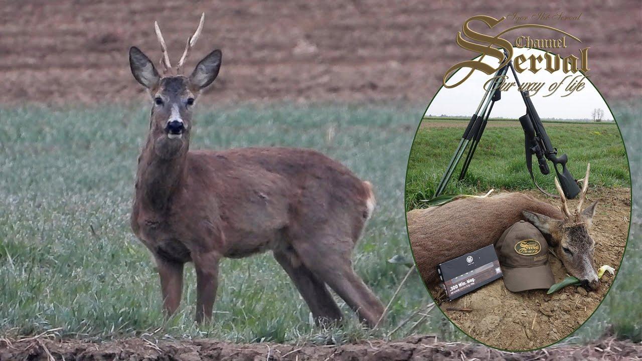 Spring Roebuck Hunting in Croatia - Sv. Martin 2021
