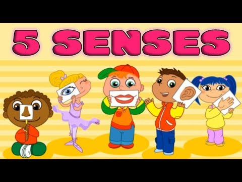 Five Senses: Taste, Smell, Sight, Hearing, Touch - Quiz for Kids
