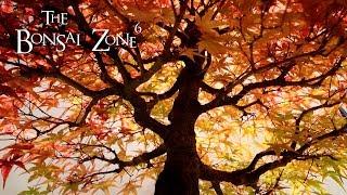 The Toronto Bonsai Society, Fall Show, The Bonsai Zone, Oct 2019