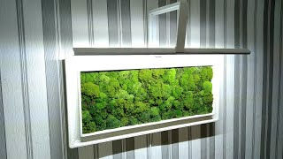 Картина из живого мха своими руками/Picture of live moss with your own hands