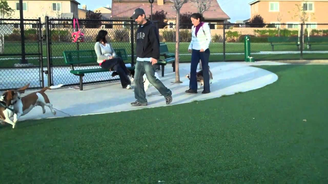 Dairyland Dog Show