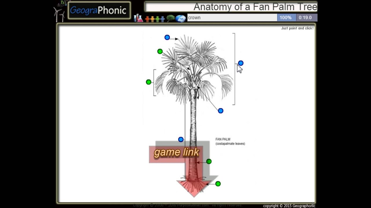Anatomy Of A Fan Palm Tree Trunk Petiole Crownleaflet Trunk