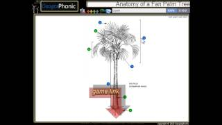 Anatomy of a Fan Palm Tree, trunk ,petiole, crown,leaflet, trunk, stem, leaf scars