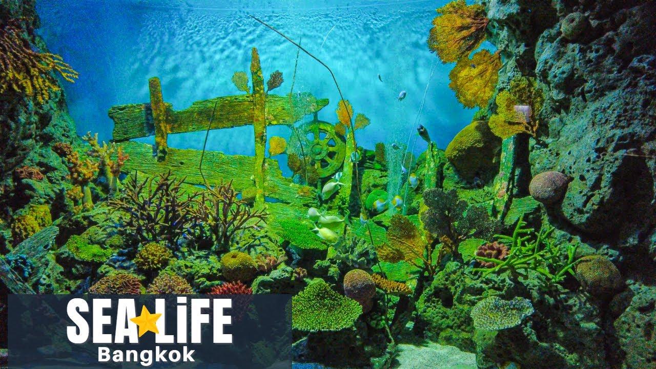 [4K] SEA LIFE Bangkok Ocean World - Aquarium in Siam Paragon Bangkok 2021