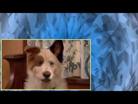 Dog with a Blog S01E01 Stan of the House