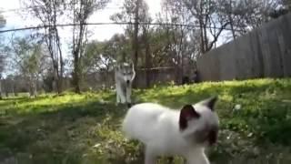 Котенок убегает от собаки