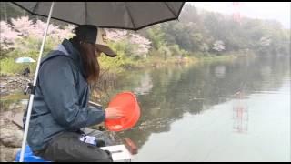 GO!GO!九ちゃんフィッシング #110 「へら鮒釣りに挑戦だ! 後篇」 thumbnail