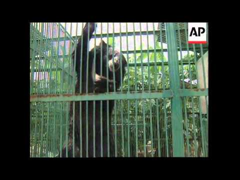 THAILAND: ILLEGAL TRADE IN WILD BEARS