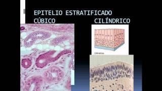 TIPOS DE EPITELIO TEMA 6 HISTOLOGÍA
