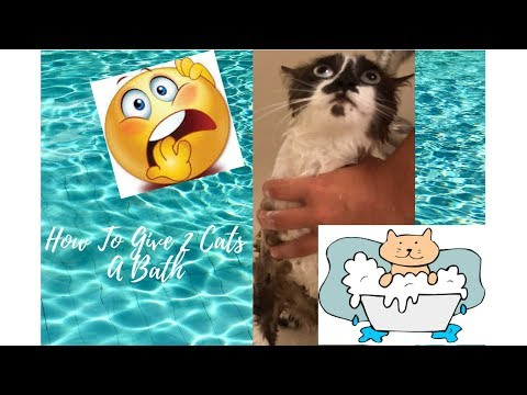 HOW TO GIVE 2 CATS A BATH!