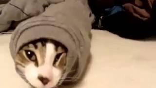 Кот червь смотреть Юмор! Прикол! Смех