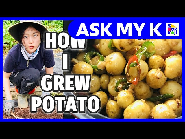 Ask My K : hhwang - кто молодец?! - How I cultivated a potato countryside of Korea