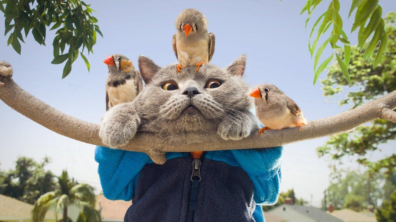Mean Birds