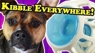 OMG, the noise! - DOG TOY REVIEWS | JW Pet Rockin Treat Ball