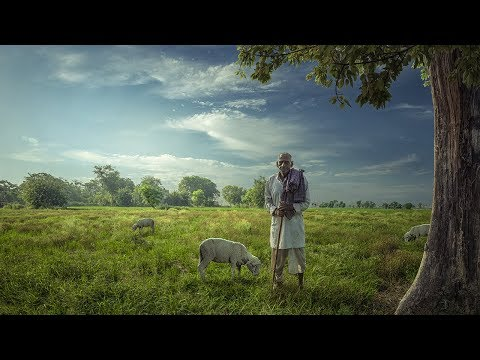 Old Man Sheep | Realistic Photoshop Manipulation Photo Effects Tutorial