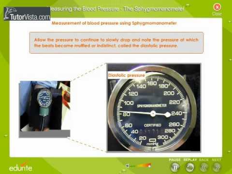 Measuring The Blood Pressure The Syhygmomanometer