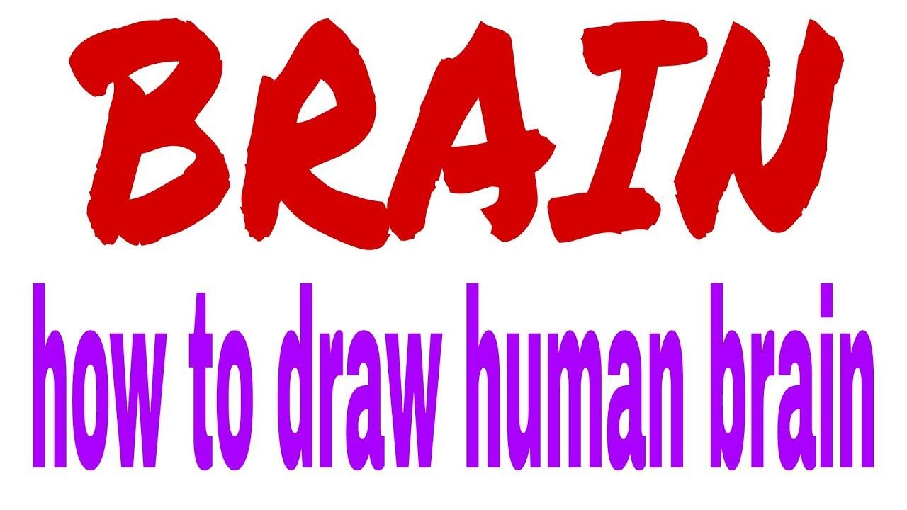 How to draw brain diagram easily - YouTube