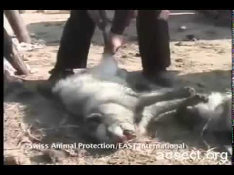 ANIMAL ABUSE HAS TO COME TO AN END!
