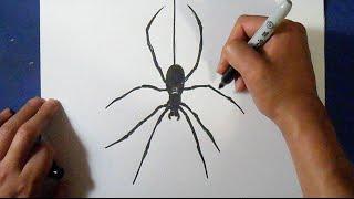 как рисовать паука(рисунок паука Музыка (Audiomicro.com) Jungle Railway 60Sec wav., 2015-04-22T19:36:43.000Z)