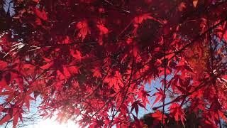ウェザーリポート動画1209@15時半頃 群馬県みどり市岩宿博物館~駐車場...