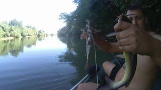 рыбалка на реке Кубань 24 07 2021 карась американский сом на печень