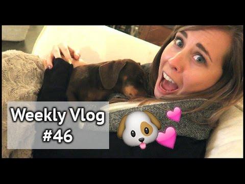 MEET CYRIL! | xameliax Weekly Vlog #46