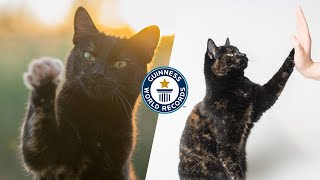 How many tricks can this cat do?  Guinness World Records