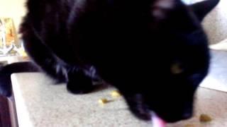 Котикам нравится корм Purina One для стерилизованных кошек