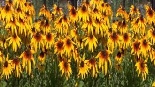 3D Клипы о природе