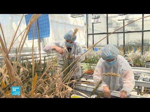 ضمان الأمن الغذائي للأجيال القادمة.. مهمة غير مسبوقة لفريق بحثي في فرنسا  - 16:58-2020 / 7 / 3