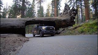 Visite complète de SEQUOIA National Park en Californie!