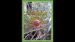 Вкусный рецепт грибов