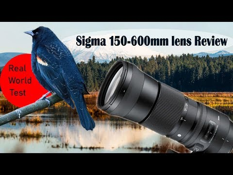 Sigma 150-600 Contemporary Review + Real World Test | Best budget wildlife lens?