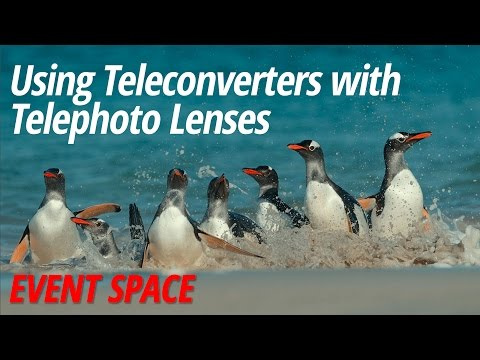 Using Teleconverters with Telephoto Lenses with Arthur Morris