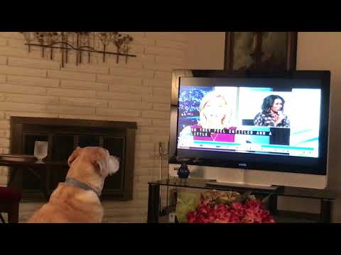 Smart Dog Reacting to the Evening News