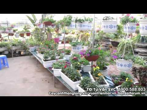Video giới thiệu bên ngoài Showroom caycanhthanglong.vn | cây cảnh thăng long