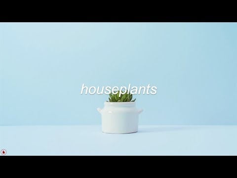 Easy Life - Houseplants (Lyrics)
