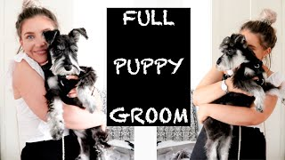 MINIATURE SCHNAUZER PUPPY | BEFORE & AFTER | FIRST FULL GROOM