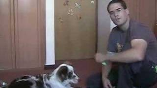 Dog Clicker Training - Teaching The Dog It's Name