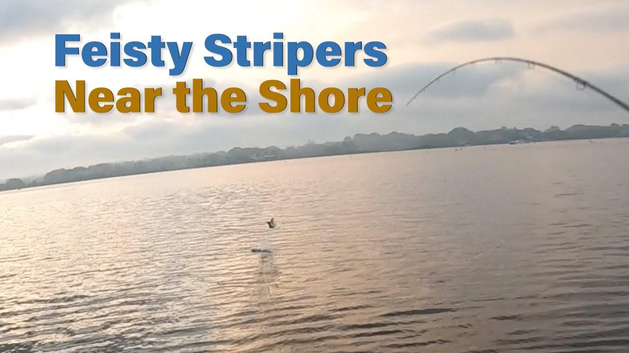 Feisty Stripers in 6 Feet of Water