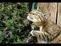 ✔ 有一樣東西是貓咪碰不得的,萬一讓牠們碰到了,就會發生下面這種笑掉大牙的事兒! ✔ 宠物屋