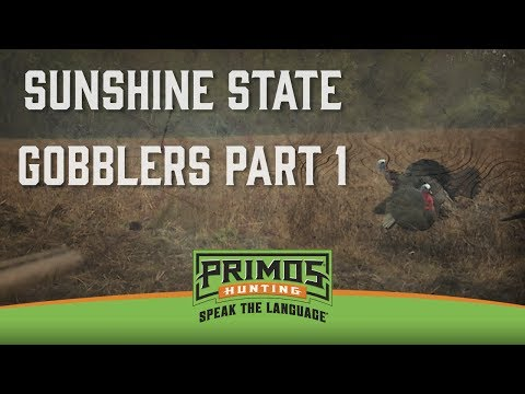 Sunshine State Gobblers Part I