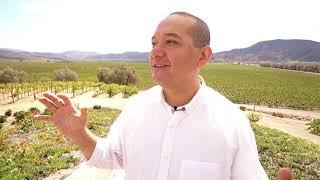 Divino Vino - Vino Mexicano en Guatemala