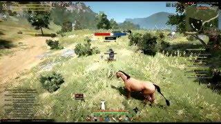Как поймать лошадь 5 грейда в BlackDesert+Bonus